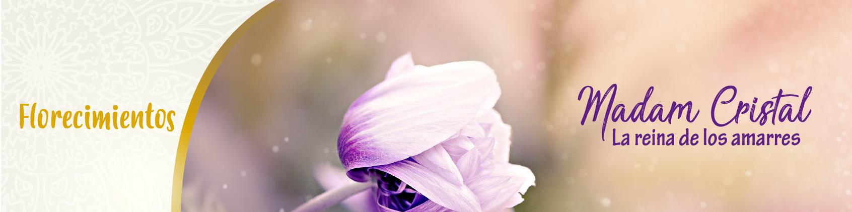 Florecimientos Madam cristal